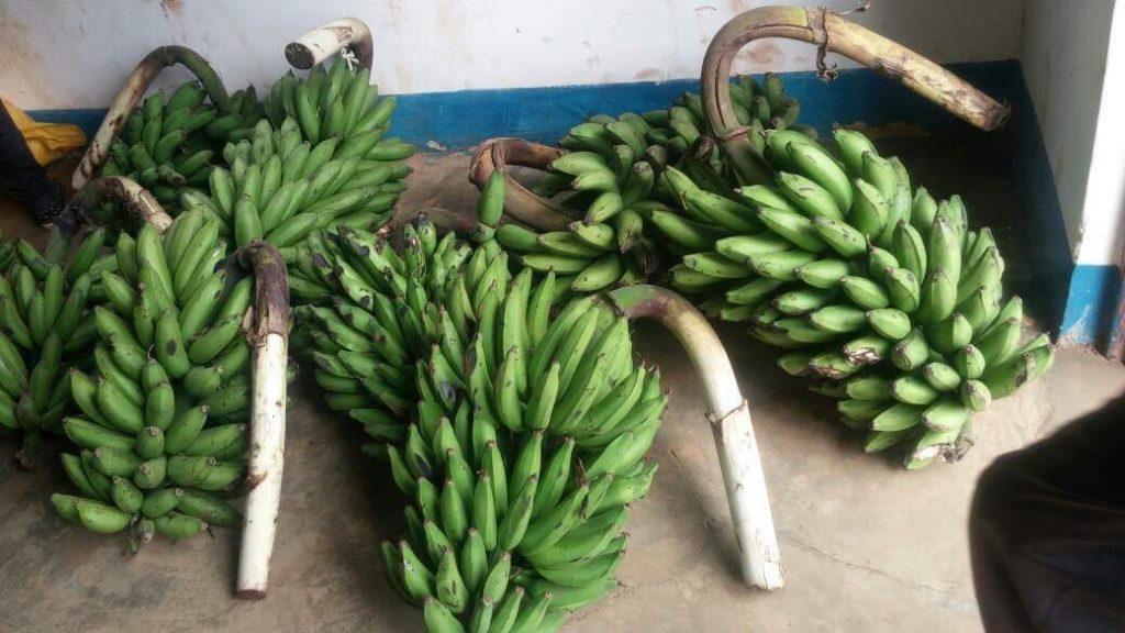 uganda_christ_bananas