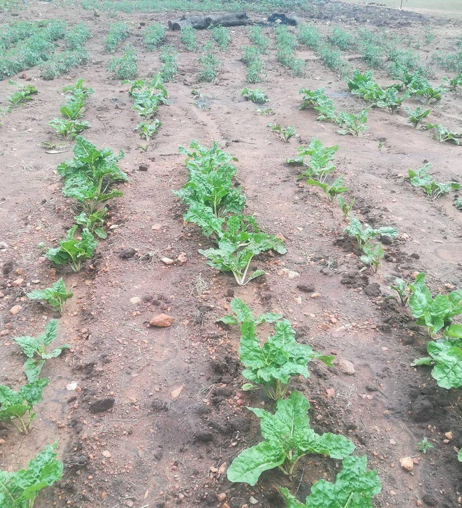 exp_farm_spinach