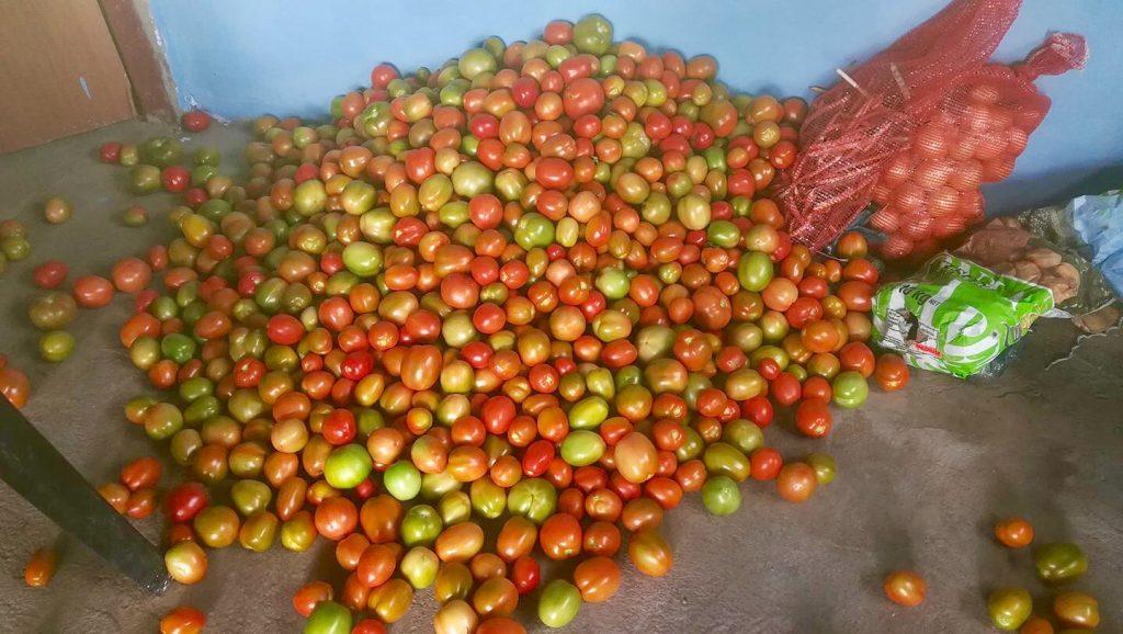harvest_pile_tomatoes